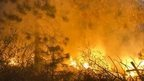 "Fire burns through tall trees near Uncle Tom""s Cabin in El Dorado County on Thursday, Sept. 18, 2014. The King fire has burned over 70,000 acres"