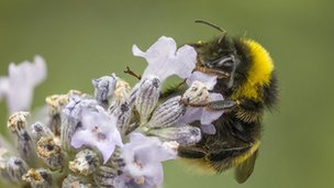 Dave Tarvit managed to take this picture of a sleeping bumblebee without disturbing the insect in Blairgowrie.