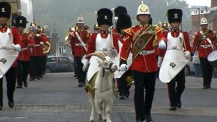 goat and parade