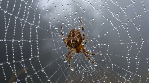 Spider on spider web