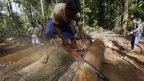 "A Ka""apor Indian warrior uses a chainsaw to ruin one of the logs they found during a jungle expedition to search for and expel loggers from the Alto Turiacu Indian territory, near the Centro do Guilherme municipality in the northeast of Maranhao state in the Amazon basin, August 7"