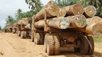 Logging in Liberia