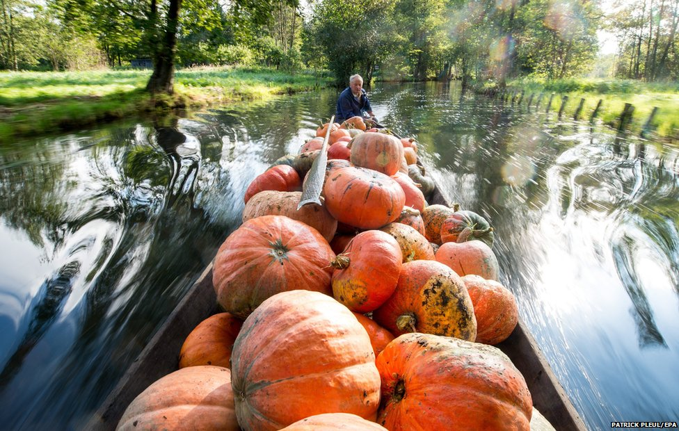 Farmer Harald Wenske travels on a barge full of pumpkins near the Spreewald village of Lehde, Germany