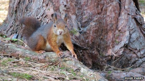 squirrel formby