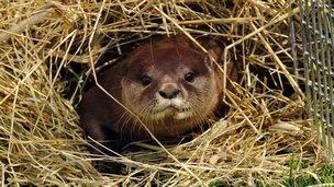 Animal at Hunstanton Sea Life Sanctuary