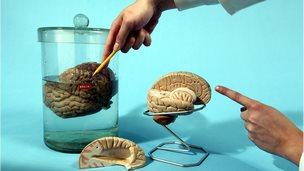 brains in a laboratory