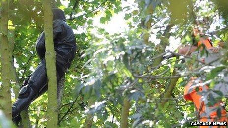 Suspect on the tree