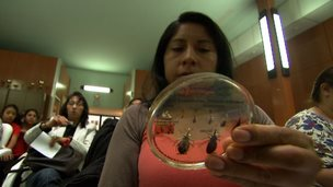 Woman looking at different samples of insects