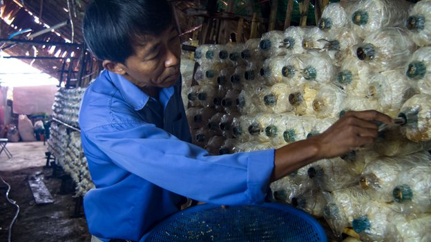 Than Wai Aung, a Burmese migrant in Thailand, battles all odds to set up his own mushroom cultivation business