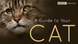 ebook guide cat
