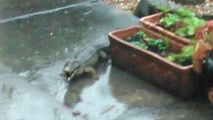 Toy crocodile