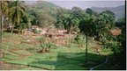 Freetown agriculture