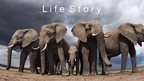 Life Story logo - Low angle of elephant herd (c) Anup Shah