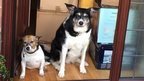 Laura Baynes' dogs with boxes