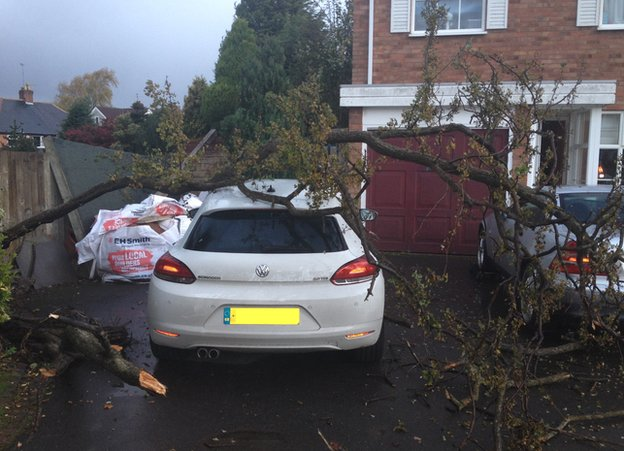 Tree on top of a car