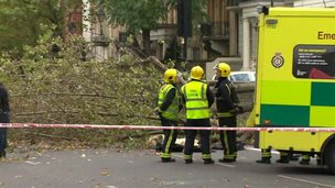 Firefighters standing next to a fallen tree
