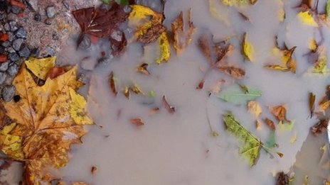 Soaked autumn leaves