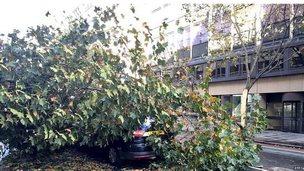 Car submerged by fallen tree.