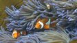 A photo taken on 22 September 2014 shows fish swimming through the coral on Australia's Great Barrier Reef
