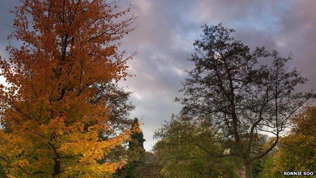 trees in Calderstone Park