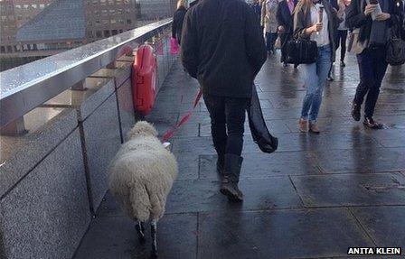 A sheep walking over the bridge