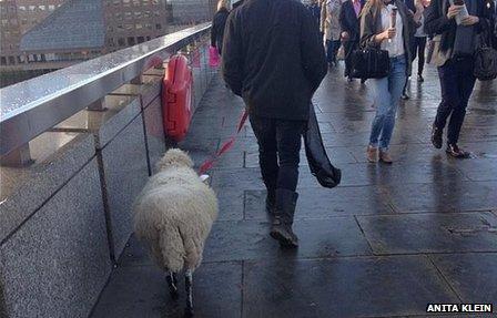 A sheep walking over the bridge