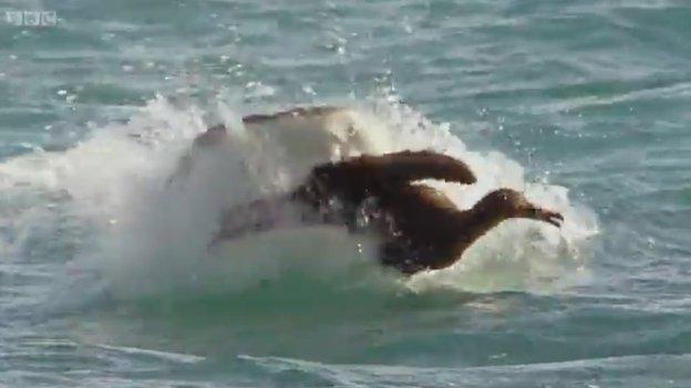 Shark eating a bird