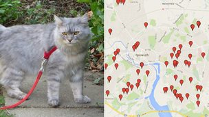 Missing cat and missing cat map