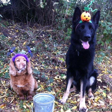 Two dogs wearing trick-or-treat costumes