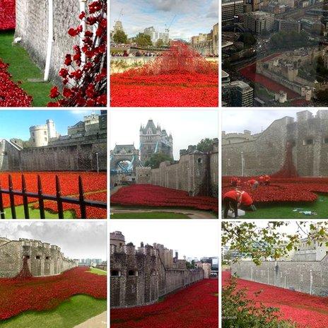 Tower of London poppy photos