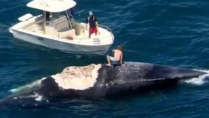 man crouches on dead whale