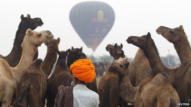 Camels at the Pushkar fair with a hot air balloon in the background