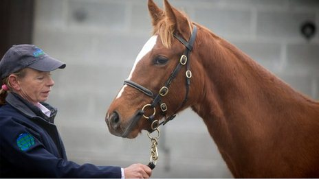 The Frankel filly foal at Goffs