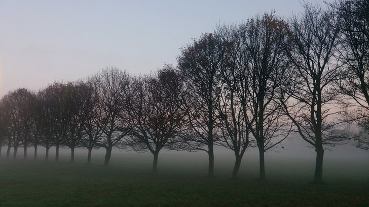 Fog in trees