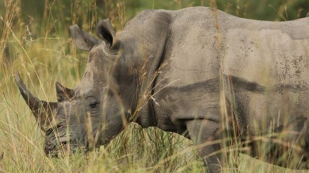 A rhino in Kruger National Park