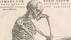 Wood cut print from the Fabrica - 16th Century medical book by Andreas Vesalius