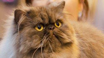 Disaronno at Supreme Cat Show