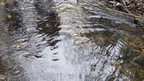 """Cong Burn trout spawning areas, or """"redds"""""""