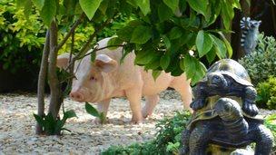 Missing fibreglass pig