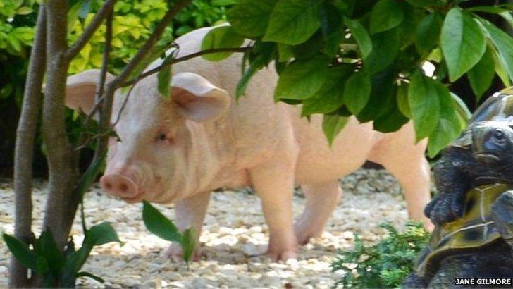 Fibreglass pig
