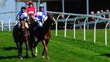 Sedgefield races