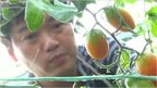 Fruit farmer
