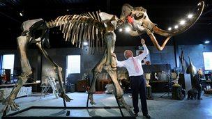 Woolly mammoth skeleton