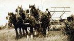 Horse drawn binder, 1930s