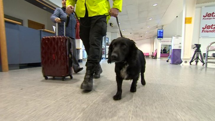 Sniffer dog at East Midlands Airport