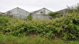 Vinery site in Guernsey