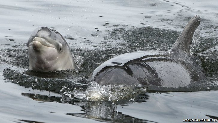 Adult dolphin and baby