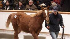 A Frankel foal on sale in Newmarket