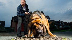 Fat berg dog