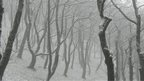 A view into a bleak forest, snow covering the ground and the branches of the trees.